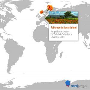 calendula-ernte-fairtrade-in-deutschland