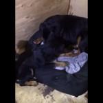 xovi-hunde-familie