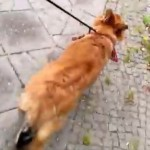 xovilichter-hund-beim-gassi-gehen