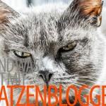 xovilichter-katzenblogger