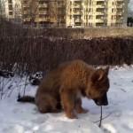 xovilichter-schaeferhund-welpe-im-schnee