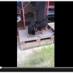 xovilichter-video-mit-hundewelpen